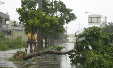 tifoon010